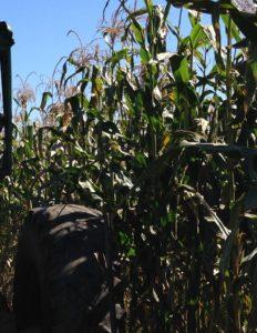 3-opcorn-llc-seed-corn-reids-yellow-dent-w-tractor